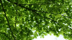 Green tree and sky from below, twisting worm`s-eye view panning shot Stock Footage