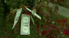 Money grow on tree trees free money Stock Footage
