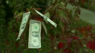 Money grow on tree trees free money Stock Footage