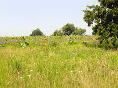 Flowering meadow and trees Stock Photos