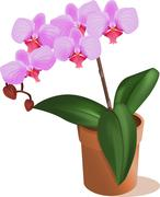 Orchid flower Stock Illustration