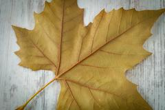 Stock Photo of autumn leaves