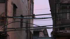 Monkeys climbing on power lines in city Stock Footage