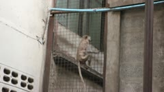 Monkey climbing on fence in city Stock Footage