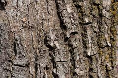 Tree bark in the background Stock Photos
