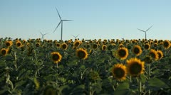 Sunflowers Field in Summer, Wind Energy, Power Turbines, Renewable, Windmills - stock footage