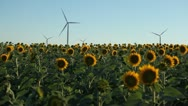 Stock Video Footage of Sunflowers Field in Summer, Wind Energy, Power Turbines, Renewable, Windmills