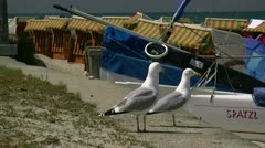 Seagulls on Baltic Sea Beach in Mecklenburg - Northern Germany Stock Footage