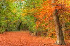 Vibrant autumn fall forest landscape image Stock Photos