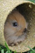 Bunny Rabbit in tube - stock photo