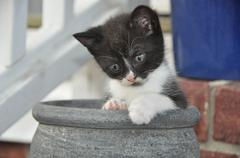 Kitten Cat in pot Stock Photos