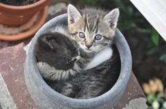 Two kittens in a pot hugging Stock Photos