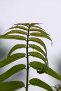 growing leaves, - stock photo