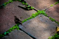 Moss in bricks Stock Photos