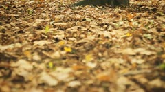 Fallen dry, yellow leaves on the ground Stock Footage