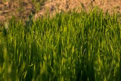 Grass on the nature Stock Photos