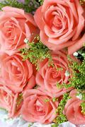 rose detail - stock photo