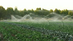 Irrigation systems in a green vegetable garden Stock Footage