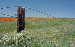 Spring-time California Wildflowers in Kern County, California - stock photo
