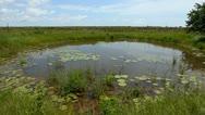 Pond Stock Footage