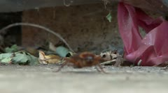 Cockroach Shallow DOF - stock footage