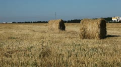 Wheat Field Harvest, Bale of Wheat Straw, Large Fields of Golden Wheat Stock Footage