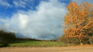 Autumn landscape with falling leaves. Stock Footage