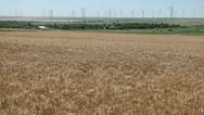 Stock Video Footage of Large Golden Wheat Fields, Cereal in Summer Season, Countryside, Bio, Eco