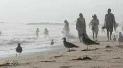 Beach Scene California 8247 Stock Footage