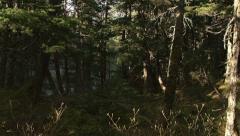 Mossy Old Forest Deep Woods Alaska - tilt Stock Footage