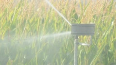 Watering the corn plantation. Irrigation close up Stock Footage