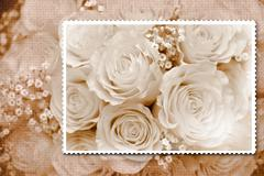 Bouquet of roses card Stock Photos