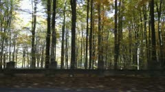 Autumn forest seen through car window while driving - stock footage