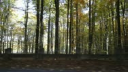 Stock Video Footage of Autumn forest seen through car window while driving