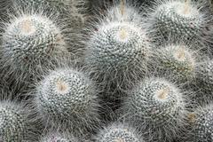 Exotic cacti - stock photo