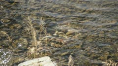Spawning Trout HD9673 Stock Footage