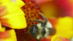 Busy bee Stock Footage