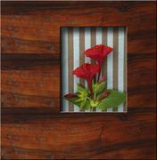 background wooden frame with fresh flowers - stock photo