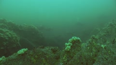 4 divers wide Stock Footage