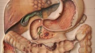 Human anatomy, abdomen , pan Stock Footage