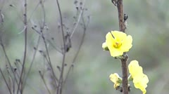 Flower in late autumn Stock Footage