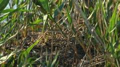 nestlings gulls, shallow depth of field 2 - stock footage