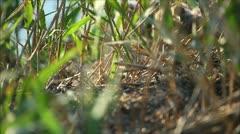 nestlings gulls, shallow depth of field 1 - stock footage