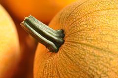 Pumpkin close up Stock Photos