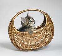 Kitten looking up in small basket Stock Photos