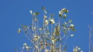 Branches on the wind Stock Footage