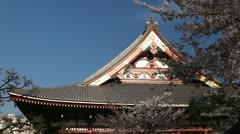 Cherry Tree Blossom, Sensoji Temple in Tokyo, Japan, Asakusa Kannon Temple Stock Footage