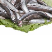 Anchovies over lettuce leaves. Stock Photos