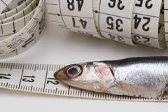 measuring anchovies. - stock photo