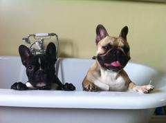 HUGO AND RALPH CHILLING IN THE BATH Stock Photos